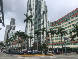 Palm trees, Downtown Miami.